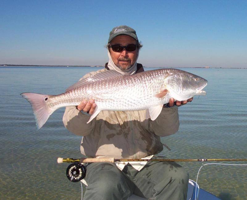 13 lb redfish with capt wayne simmons fly fishing guide safety harbor florida