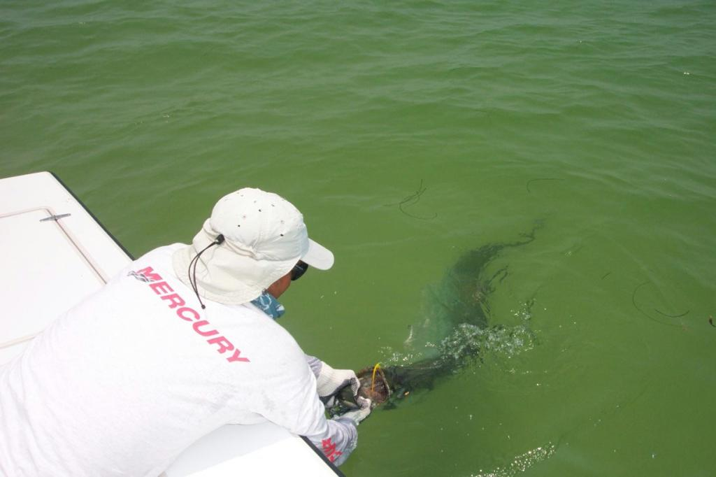 fly fishing guide tampa bay contact captain wayne