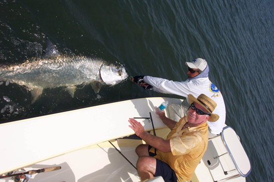 giant tarpon caught with capt. wayne simmons fly fishing tampa bay