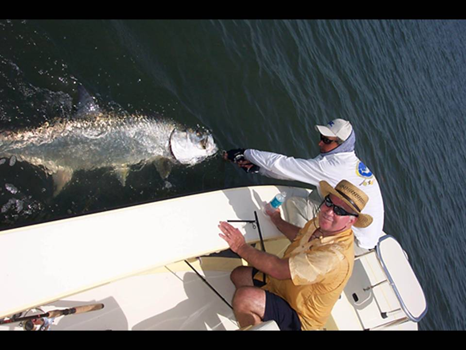 giant tarpon caught with capt wayne simmons fly fishing dunedin florida